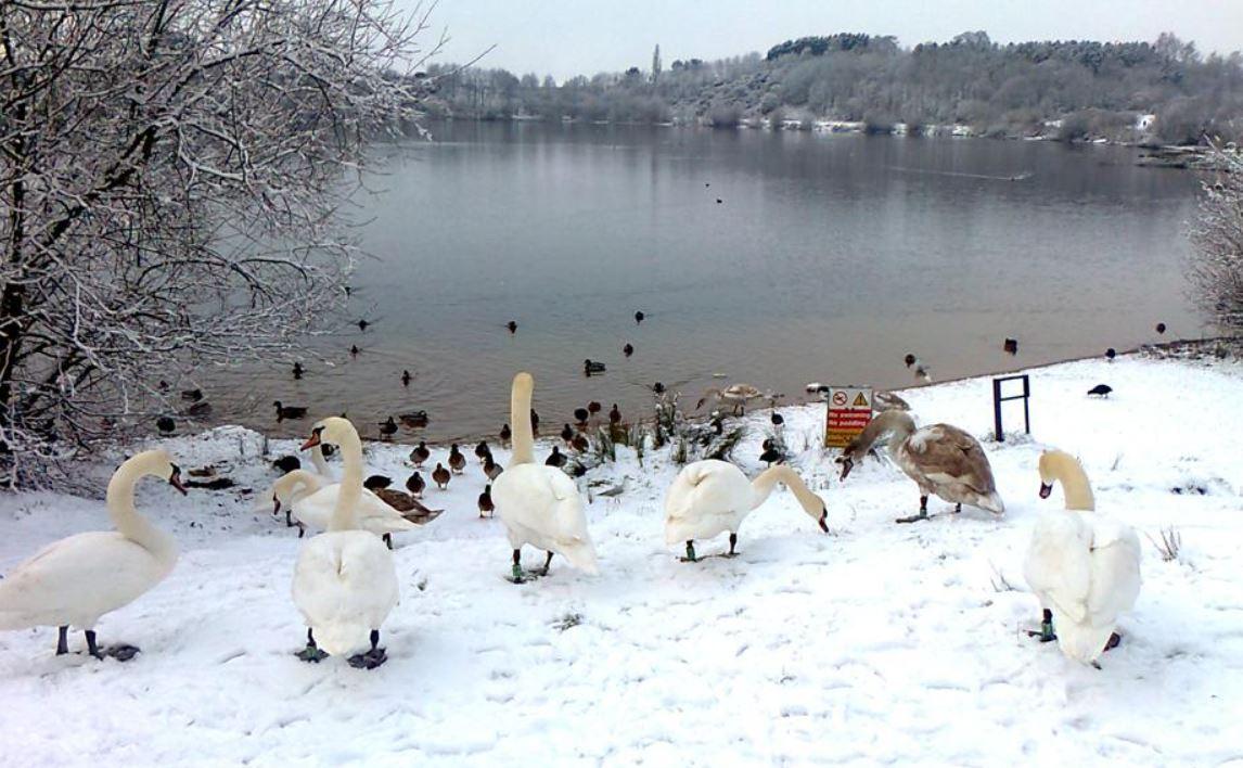 Winter at Astbury Mere