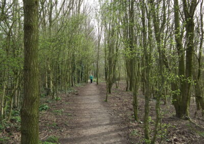 Astbury Mere Country Park Spring Woodland Path