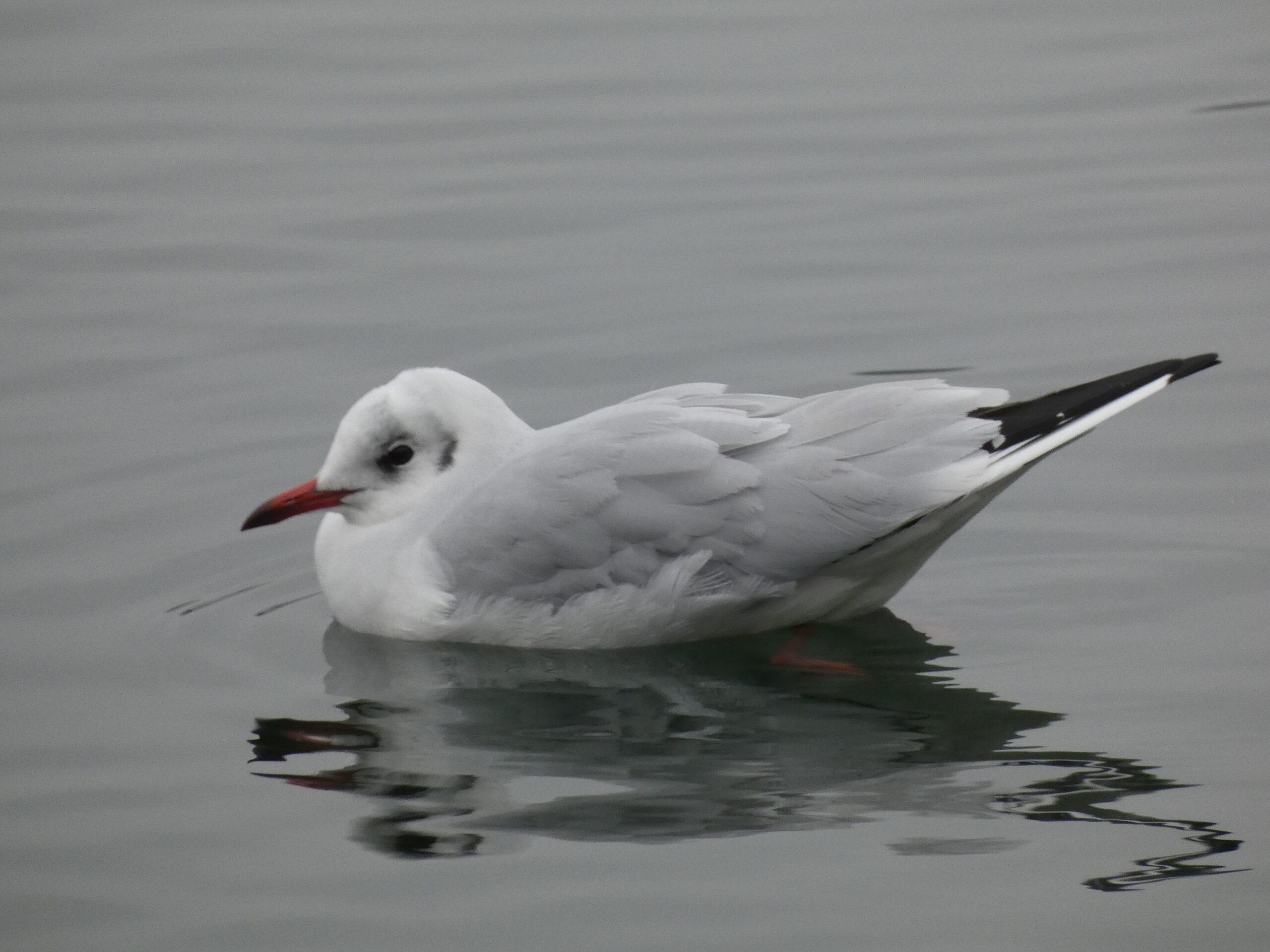 Wildlife at Astbury Mere