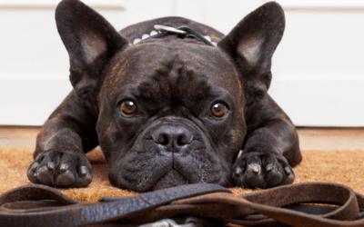 Astbury Mere Dog Walkers Code of Conduct